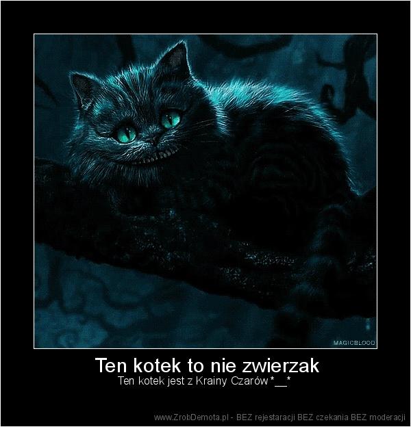 zrobdemota pl ten kotek to nie zwierzak ten kotek jest z krainy