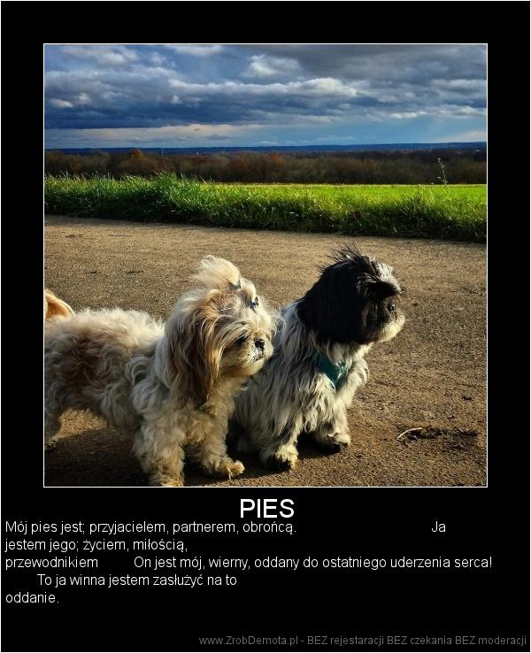 363eadc73 ZrobDemota.pl - PIES Mój pies jest  przyjacielem